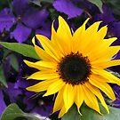 Sunflower by Anthony Thomas