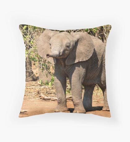 Elephant, Mashatu, Botswana Throw Pillow