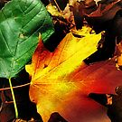 Mixed Palette by Nadya Johnson