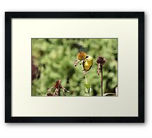 Want to Make Out? Framed Print