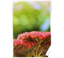 Pink summer flower petals in green background Poster
