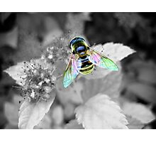 Colorful Wings 2 Photographic Print