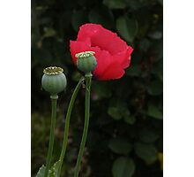 """""""Age Shall Not Weary Them..."""" Photographic Print"""