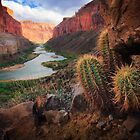 Marble Canyon Cactus by Inge Johnsson