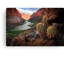 Marble Canyon Cactus Canvas Print