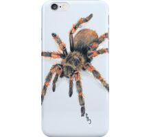 Mexican Red Knee Tarantula  iPhone Case/Skin