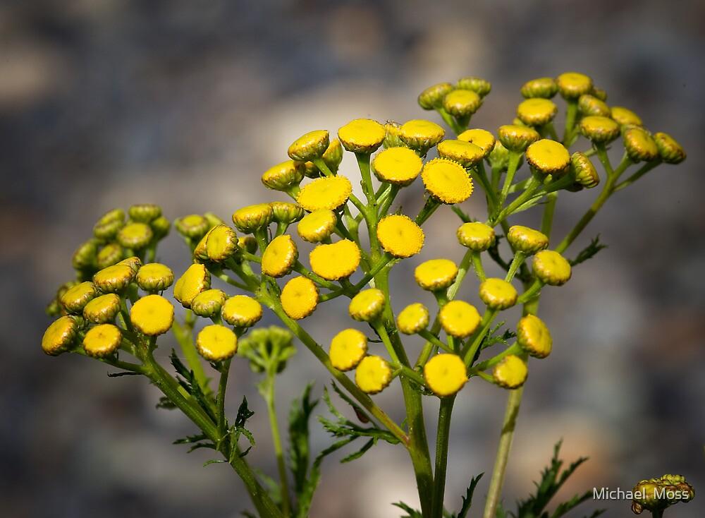Beauty In Yellow by Michael  Moss