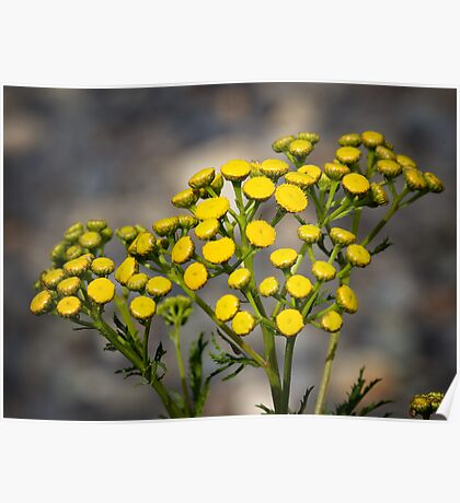 Beauty In Yellow Poster