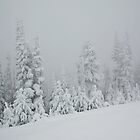 Snowy Trees by Curtis Cunningham