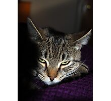 You Dare To Wake Me Again?!  You Must Have A Death Wish!! Photographic Print
