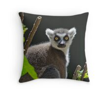 Ring-Tailed Lemur, Adelaide Zoo. Not sure if this is Cheech or Chong Throw Pillow