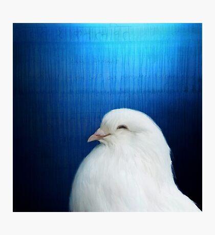 Bird Notes: Dove Photographic Print