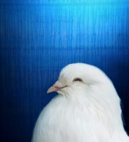 Bird Notes: Dove Sticker