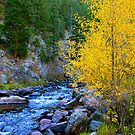 Fall Aspen on the River by Joy Fitzhorn
