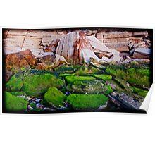 Mossy Rocks at Sunrise Poster