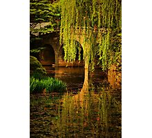 Reflections on Garden Pond Photographic Print