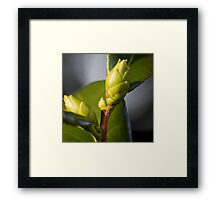 Fresh Buds Framed Print