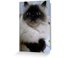 Cat with Blue Eyes Greeting Card