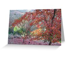Japanese and Trident Maples - A Thamo Greeting Card