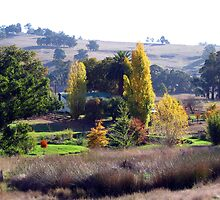 The Homestead in Early Autumn  -  A Thamo by Golden Valley Tree Park