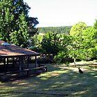 The Rotunda - Andrew Thamo by Golden Valley Tree Park