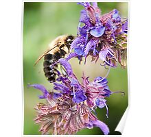 Bee and Flowers Poster
