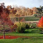 Golden Valley Tree Park by Golden Valley Tree Park