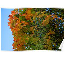 Falling for Fall Poster