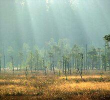 17.10.2011: Autumn's Light I by Petri Volanen