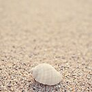 Shell by Anthony and Kelly Rae