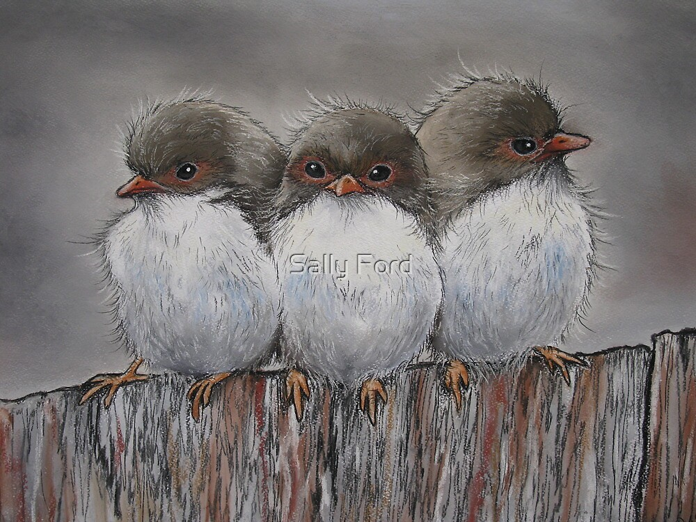 Fairy Wren Family by Sally Ford