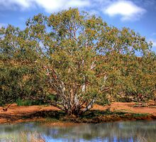 Billabong - Mannum Falls, Murraylands, South Australia by Mark Richards