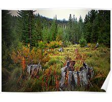 High Cascades Fall Poster