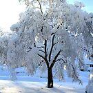 The Magic Tree by Michael Degenhardt
