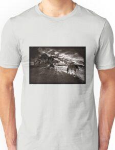 Horses 3 T shirt T-Shirt