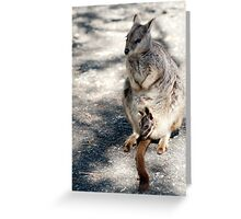 Peekaboo - Mareeba rock wallaby Greeting Card