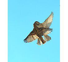The Sparrow Waltz Photographic Print