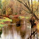Fall Along the Stream by BarbL