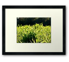 Lush Greenery Framed Print