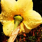 Underneath the Daffodil by MichelleRees