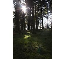 Sun shining through the woods Photographic Print