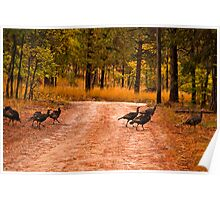Why did the turkey cross the road? Poster