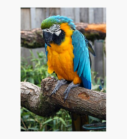Colourful Parrot Photographic Print