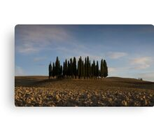 pencil pines near pienza Canvas Print