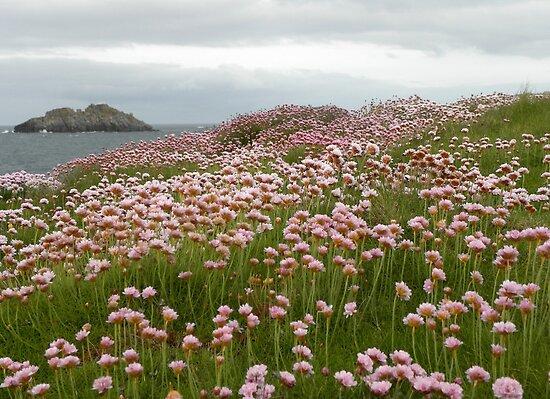 Encounter with Wild Flowers by Sarah Jane Bingham