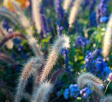 Wild Flowers by Vac1