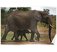 Elephants - Baby with Mother Poster