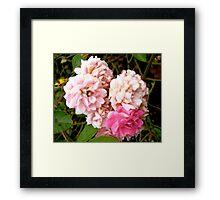 Governor General's rose 4 Framed Print