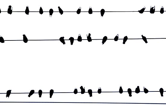 Birds on a Wire by Erika  Hastings