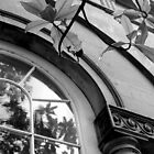 Window and Vine by Pippa Carvell